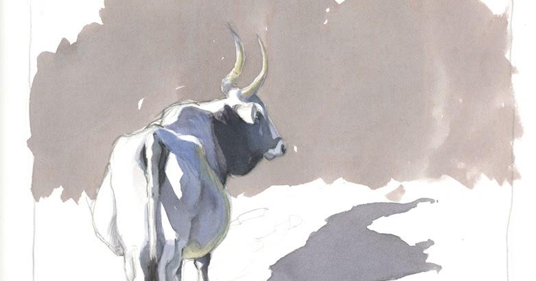 vacca-maremmana
