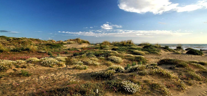 Ore 19:00 - Passeggia accanto a splendide dune costiere a Passoscuro