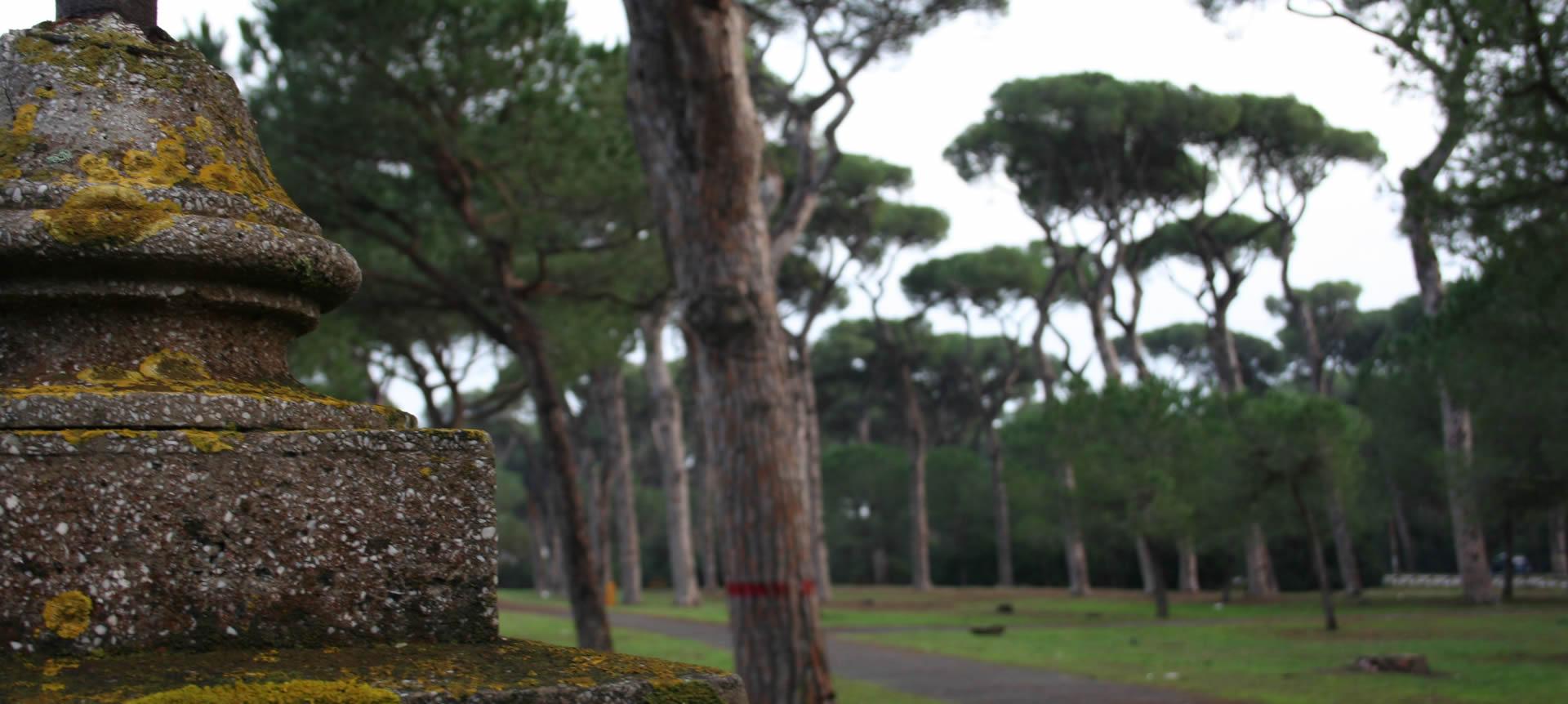Ore 16:00 - Passeggiata nella natura nella pineta monumentale di Fregene
